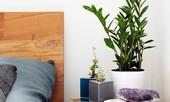 8 loại cây cảnh nên đặt trong phòng ngủ