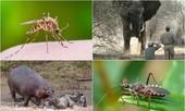 1001 thắc mắc: Loài động vật giết người đáng sợ nhất thế giới?