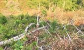 Gần 2.000 ha rừng tự nhiên suy giảm, Đắk Nông đề nghị chuyển cơ quan điều tra