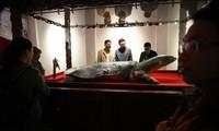 Tiêu bản cụ rùa Hồ Gươm chết năm 2016 được đặt trong tủ kính gần 4 tỷ đồng