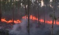 VIDEO: Hàng trăm người dập cháy rừng ở Phú Yên