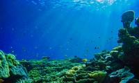 Đại dương cần thiết với sự sống trên Trái Đất thế nào?