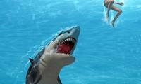 Cá mập trắng tấn công nhóm thợ lặn ngoài khơi Australia
