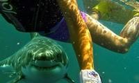 Làm thế nào để ngăn bị cá mập cắn khi đang lặn?
