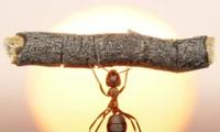 Thế giới sẽ ra sao nếu như không có loài kiến?