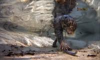 Loài mèo thích bơi lặn, săn mồi dưới nước