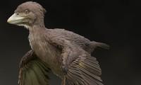 Vì sao loài chim sống sót khi khủng long tuyệt chủng?