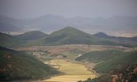 Cánh đồng lúa ở làng Kaepoong nhìn từ đài quan sát phía Hàn Quốc. (Ảnh: Reuters)