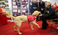 Chó được huấn luyện ngửi mùi Covid-19