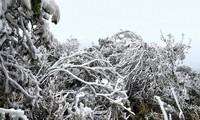 Mẫu Sơn như một cung điện mùa đông hoành tráng. Ảnh: Lăng Huy