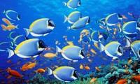 Nếu muối trong nước biển được tách ra sẽ tạo thành một lớp dày tới 152 mét trải đều khắp các lục địa.