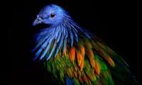 1001 thắc mắc: Vì sao lông chim quý thường có màu xanh?