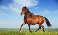 Ngựa thích ngủ đứng