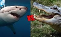1001 thắc mắc: Vì sao cá sấu lại nguy hiểm hơn cá mập?