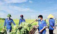 Giúp người dân 'giải cứu' hơn 20 tấn rau xanh chỉ trong một buổi sáng