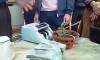 Cây lan Hồng Bồng Lai 7cm được chuyển nhượng với giá hơn 1,6 tỷ đồng.