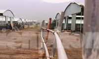 Dự án trang trại bò lớn nhất Hà Tĩnh sẽ 'hồi sinh' như thế nào?