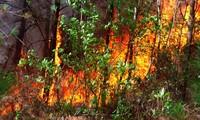 Hơn 1000 người đang căng mình dập đám cháy rừng lan rộng ở Nghệ An