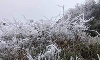 Băng giá phủ trắng xóa rừng cây ngọn cỏ ở miền núi Nghệ An