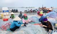 Được mùa cá cháo, ngư dân Hà Tĩnh thu tiền triệu mỗi chuyến ra khơi