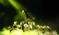 Nghệ sĩ múa hướng về đồng bào miền Trung