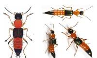 3 loại thuốc cần có trong nhà phòng khi bị côn trùng đốt