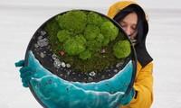 Nữ nghệ sĩ làm tranh tường độc đáo từ cây cỏ thiên nhiên