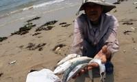Cá chết trôi dạt ở bờ biển miền Trung.