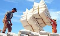 Nhiều bất cập trong việc xuất khẩu gạo