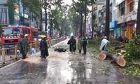 TPHCM: Người bị cây ngã đè ở quận 10 tử vong tại bệnh viện