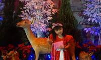 Người dân rủ nhau 'check-in' tại biệt thự ngập tràn không khí Noel của Đàm Vĩnh Hưng