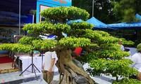 'Siêu cây' trăm tuổi được định giá cả triệu USD
