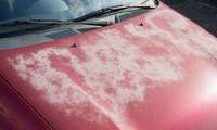 Sơn ngoại thất của ôtô bị phai màu dưới ánh nắng. Ảnh: 800 New Again