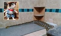 Đi tìm mèo cưng, bé gái chạm trán quái thú khổng lồ ngay trong bếp