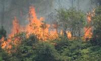 Hà Tĩnh: Liên tiếp cháy rừng, khẩn cấp di dời gần 100 hộ dân