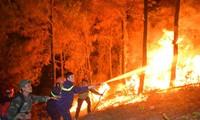 Tạm giữ một đối tượng nghi gây cháy rừng ở Nghi Xuân