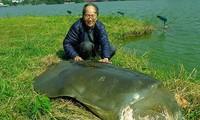 Thế giới thực sự còn bao nhiêu 'cụ rùa Hồ Gươm'?