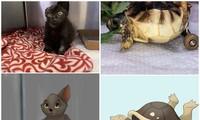 """Nữ họa sĩ 9X được """"săn lùng"""" nhờ vẽ những thú cưng tàn tật thành nhân vật hoạt hình Disney"""