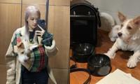 Netizen muốn xỉu khi nhìn vào kho đồ hiệu của chó cưng nhà Rosé: Giàu vậy ai chơi lại
