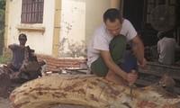Người dân đẽo vỏ gỗ sưa để chuẩn bị đấu giá lại. Ảnh: PV