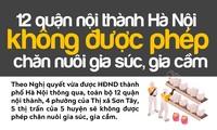 12 quận nội thành Hà Nội không được phép chăn nuôi gia súc, gia cầm
