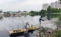 Cá chết đầy sông khu chung cư Ehome 3