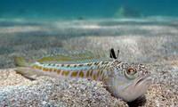 """Tin """"sốc"""": Cậu bé 16 tuổi chết ngay lập tức chỉ vì chạm vào con cá kỳ lạ khi đang lặn biển"""