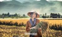 Hoa khôi Tài chính xinh đẹp khi hóa thân thành nông dân trên cánh đồng Mường Thanh
