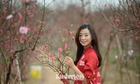 """Cận cảnh vườn đào Nhật Tân được giới trẻ """"Check-in"""" ngày cuối năm"""