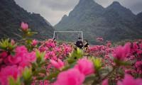 Lạc vào thiên đường hoa đỗ quyên lớn nhất Việt Nam