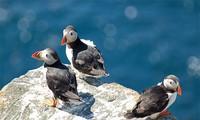 1001 thắc mắc: Tại sao chim hải âu cổ rụt lại có chiếc mỏ lớn?