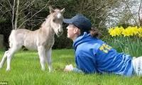 1001 thắc mắc: Loài ngựa nhỏ nhất thế giới sống ở đâu?