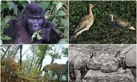 1001 thắc mắc: Những loài động vật nào có nguy cơ biến mất vĩnh viễn trên Trái Đất?