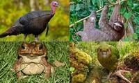 1001 thắc mắc: Những loài động vật nào nổi tiếng về độ ngớ ngẩn?